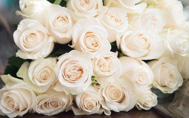 白バラの待ち受け