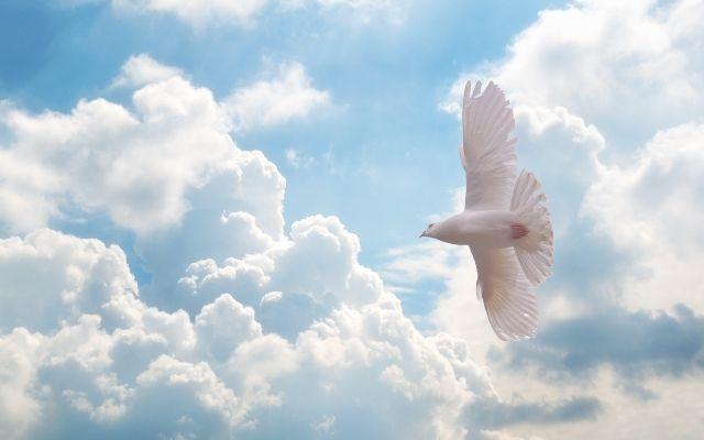 白い鳩の待ち受けで絶対彼から連絡がくる