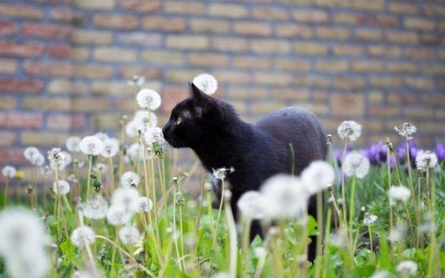黒猫の待ち受けは音信不通の彼から連絡がくる