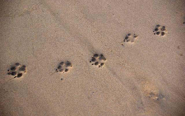 運命の出会いをする待ち受けは動物の足跡