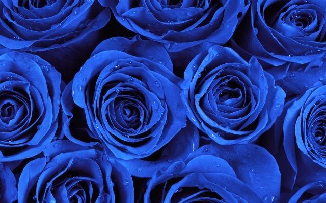 青いバラの復縁効果