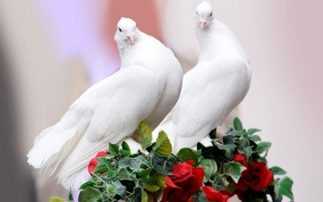 白い小鳥の画像待ち受けで結婚相手に巡り合える
